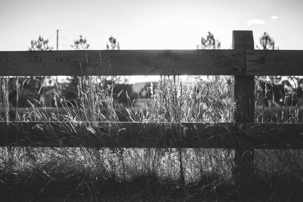 dividing fences