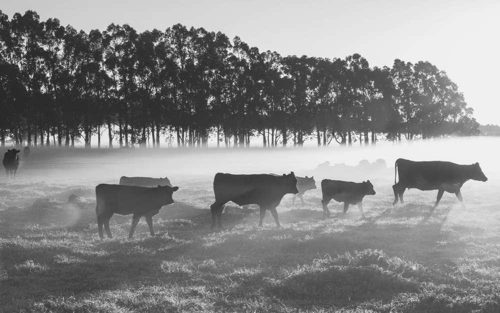 beef industry update